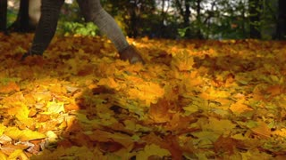 Woman walking on the forest litter in the park, slow motion shot at 240fps
