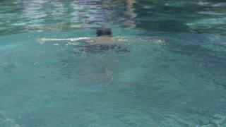 Young man diving in the swimming pool, slow motion shot at 240fps
