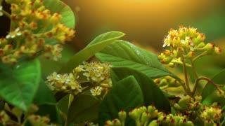Beautiful Nature-slider shot