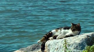 Cat having sunbath at seaside 3