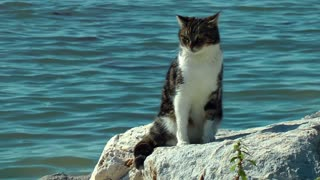 Cat on the rock at seaside 2