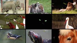 Collage of wildlife animals