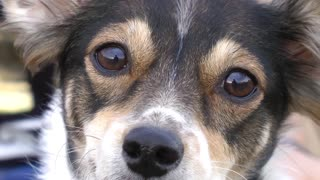 Cute dog looking at the camera