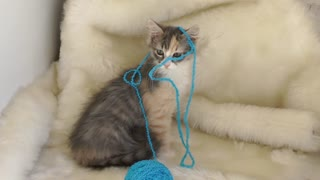 Cute kitten playing with wool ball