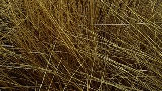 Dry Grass Field-slider shot