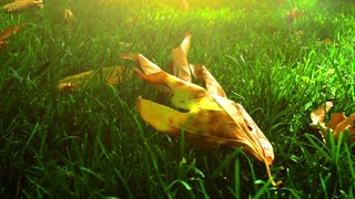 Dry Leaves on Grass Field