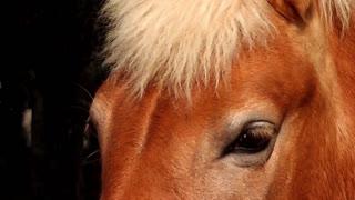 Eyes of Horse - close up shot 2