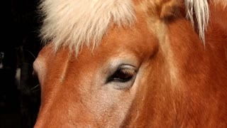 Eyes of Horse - close up shot