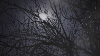 Moon and trees in foggy night