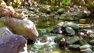 Mountain stream and rocks in forest