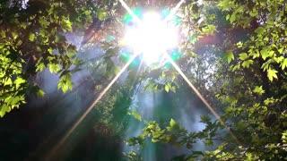Mystic Forest Slider