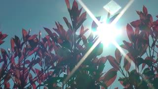 Sun beams behind plants 2