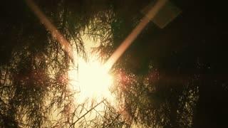 Sun  Beams Behind theTree
