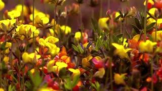 Wild flowers -slider shot