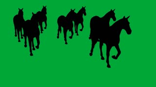 3d animation of horses galloping - separated on green screen