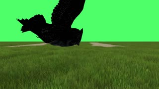 3D animation clip of flying Great American Horned Owl on green screen