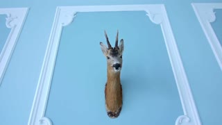 Deer head hanging on the wall