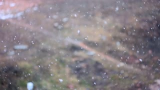 First snow outside