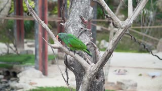 Exotic motley parrot climbs on the branch of the tree in tropical garden, asian birds, fauna of the tropical forest