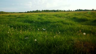 Green meadow under blue sky with clouds with butterfly