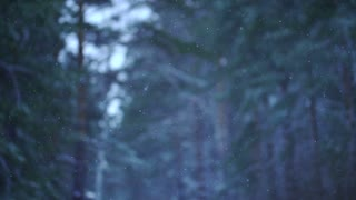 Snow falling in a forest