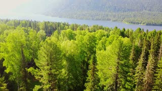 Aerial view of a forest and a mountain lake