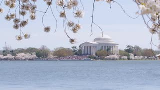 Overlooking Potomac to see tourists gathered around Jefferson Memorial during Cherry Blossom Festival, Washington, DC