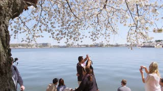 People mulling about and couple posing for picture under cherry blossom tree by calm body of water in Washington, DC with Thomas Jefferson Memorial in the background
