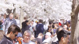 Tourists gather under cherry blossoms as sunlight sprinkles through during Cherry Blossom Festival in Washington, DC
