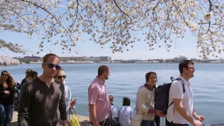 Tourists passing across Potomac from Jefferson Memorial, as some rest to take photos during Cherry Blossom Festival in Washington, DC