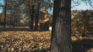 little girl hiding behind a tree in the autumn forest