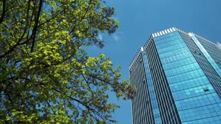 Top business center. View through green trees, crown, panorama. Blue sky.