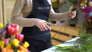 Woman's hands trying to cut a spray of rose bouquet
