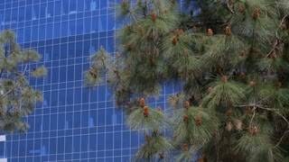 Office Building With Foreground Trees.  Slow dolly shot of a blue glass high rise.  Shot In 4K, 10 Bit, Apple Pro Res 422.