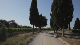 CAR POV WS Driving down dirt road lined with cypress trees / Tuscany, Italy