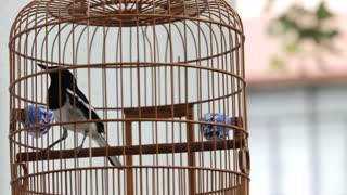 CU Bird in bamboo cage outdoors / Hong Kong, China