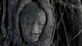 CU Face of stone Buddha in tree / Ayutthaya, Thailand