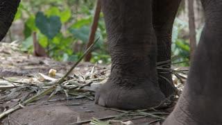 CU PAN TU Feet and trunk of elephant / Bangkok, Thailand