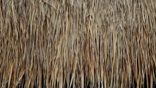 CU Thatch on roof of hut / Indonesia