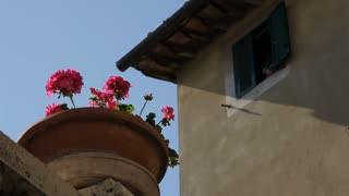MH LA LD Planted Flowers in front of House / Tuscany, Italy