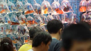 MS Group of people looking at fish displayed in plastic bags on wall in market / Hong Kong, China