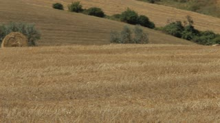 MS PAN Harvested field with hay bales / Tuscany, Italy