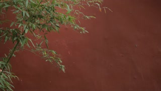 MS Young woman with paper umbrella walking past red wall and bamboo tree / Beijing, China