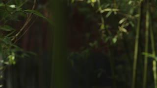 PAN CU SELECTIVE FOCUS Bamboo forest / Beijing, China