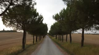 POV of a car driving down a treelined road, Tuscany, Italy