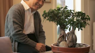TU MS Senior man smiling and looking at bonsai tree at home / China