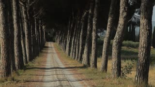 WS Dirt road lined with trees / Tuscany, Italy