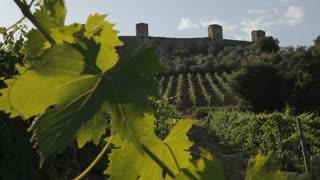 WS DS Vineyard / Tuscany, Italy