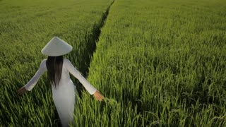 WS HA LD Young Woman Wearing Ao Dai Walking Across Rice Paddy / Hoi An, Vietnam