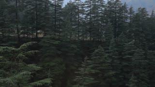 WS HA PAN Pine trees and Himalayan mountains / India